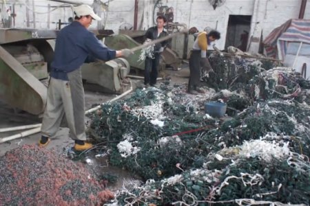 workers recycling christmas lights